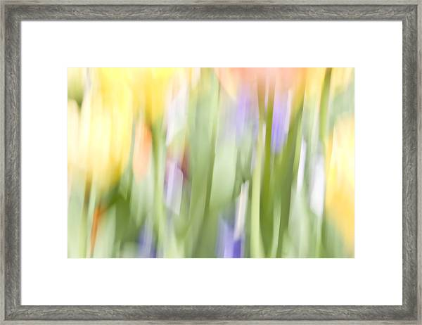 North Hills Tulips II Framed Print