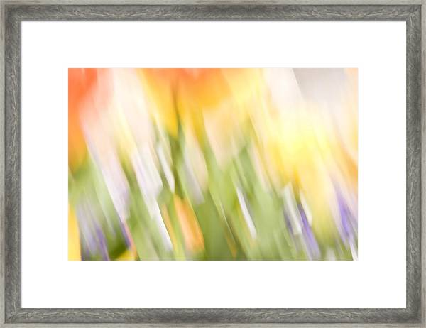 North Hills Tulips IIi Framed Print