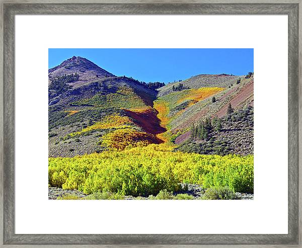 North Lake Aspen Stand Framed Print