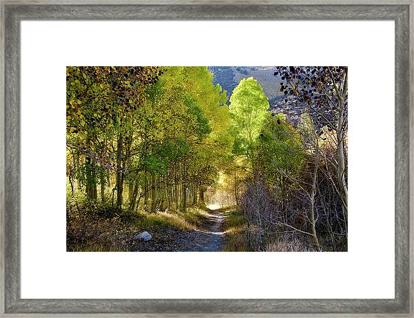 North Lake Aspens 2 Framed Print