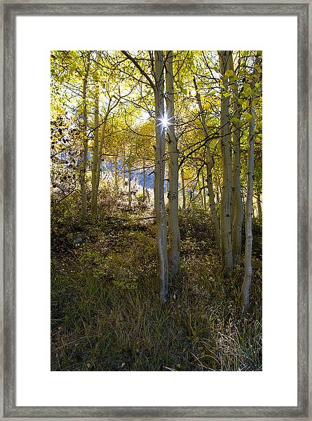 North Lake Aspens Framed Print
