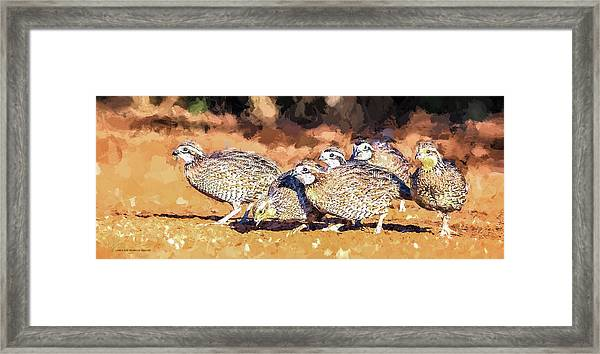 Northern Bobwhite Digital Art  Framed Print