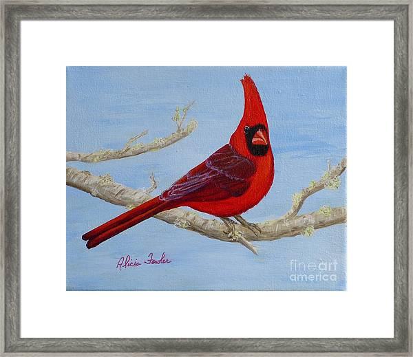 Northern Cardinal 2 Framed Print