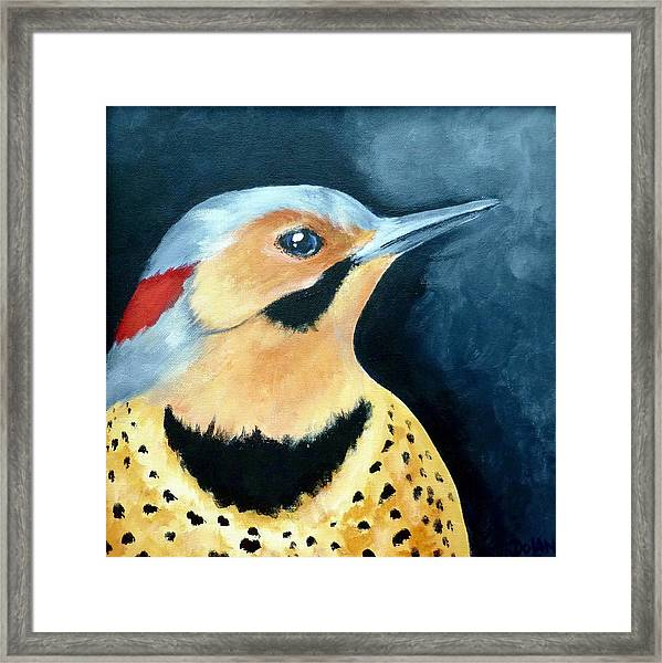Northern Flicker Framed Print
