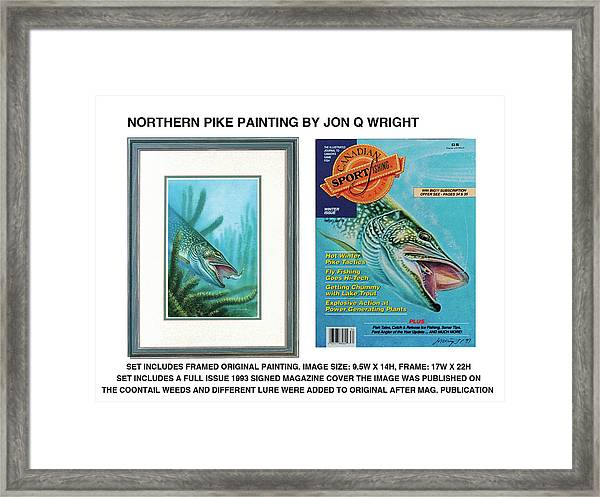 Northern Pike Original Framed Print by JQ Licensing