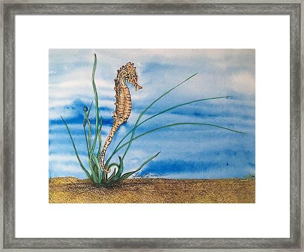 Northern Seahorse Framed Print