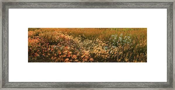 Northern Summer Framed Print