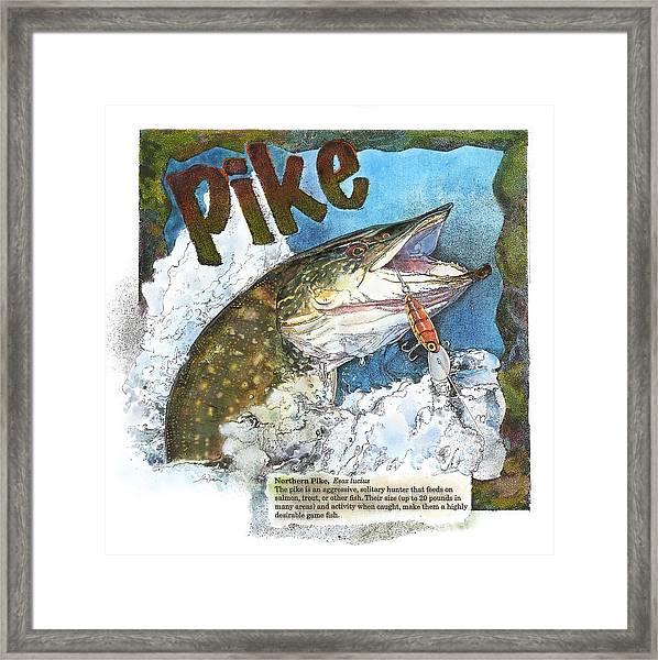 Northerrn Pike Framed Print