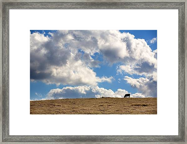 Not A Cow In The Sky Framed Print