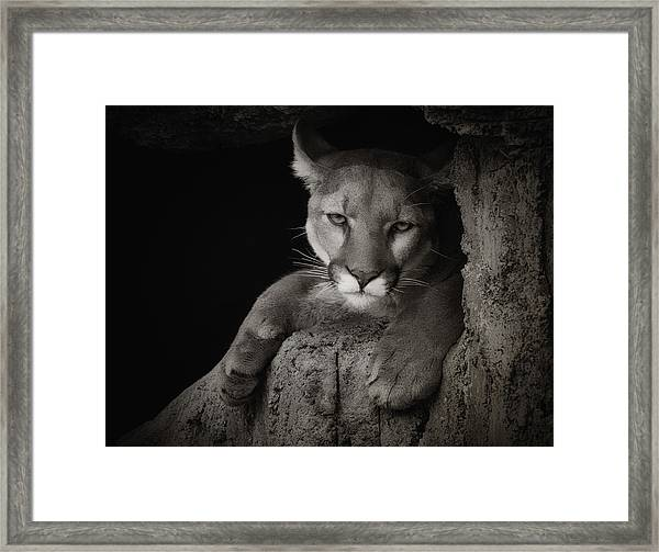 Not A Happy Cat Framed Print