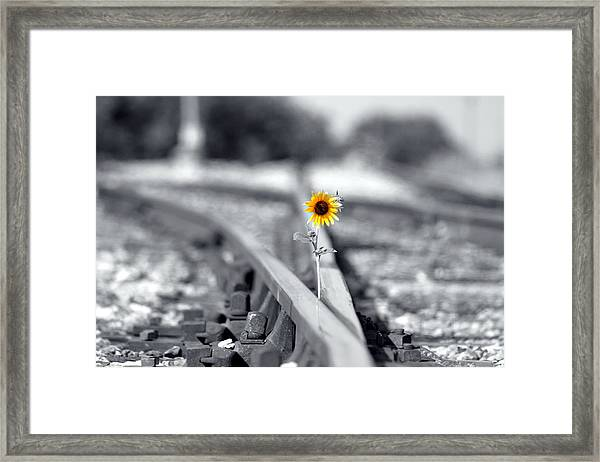 Not So Desolate Framed Print