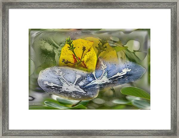 Not Sure But.... Framed Print