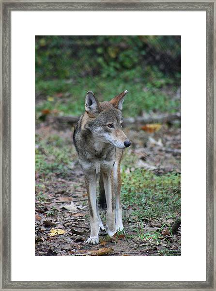 Now Those Are Some Legs Framed Print