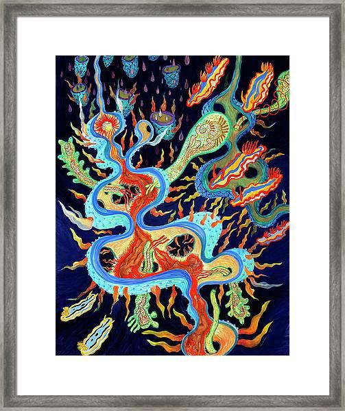 Nudibranchs On Parade Framed Print