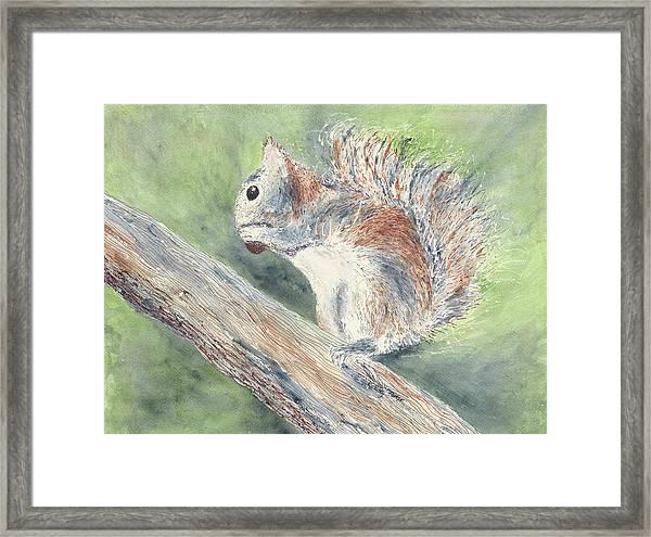 Nut Job Framed Print