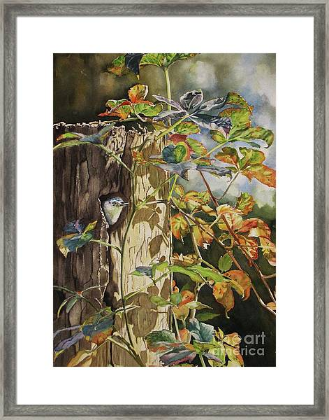Nuthatch And Creeper Framed Print
