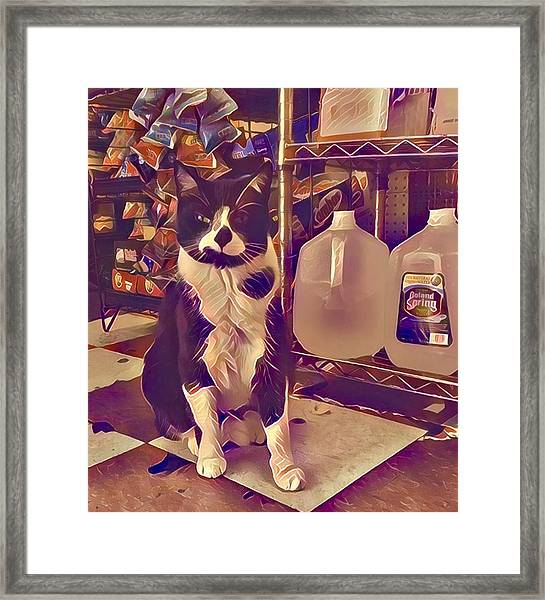 Nyc Bodega Cat Framed Print