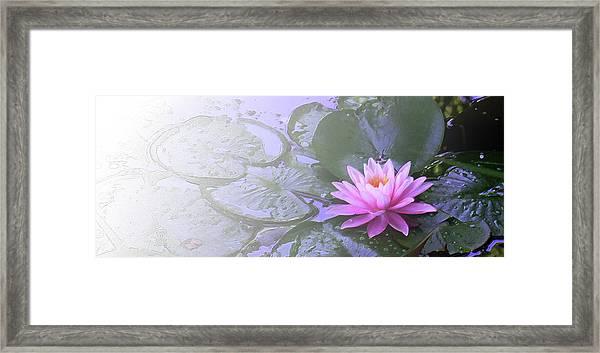 Nz Lily Framed Print