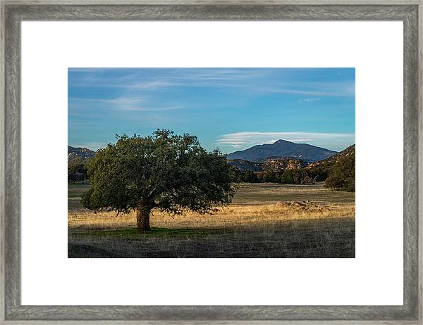 Oak And Cuyamaca Framed Print