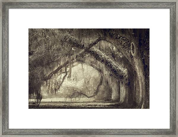 Oak Avenue Framed Print