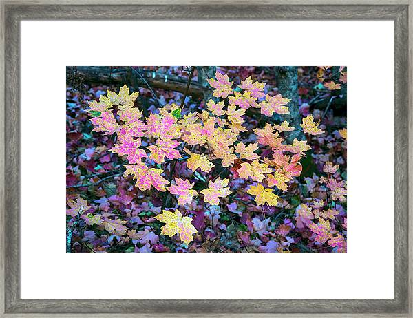 Oak Creek Canyon Fall Colors Framed Print