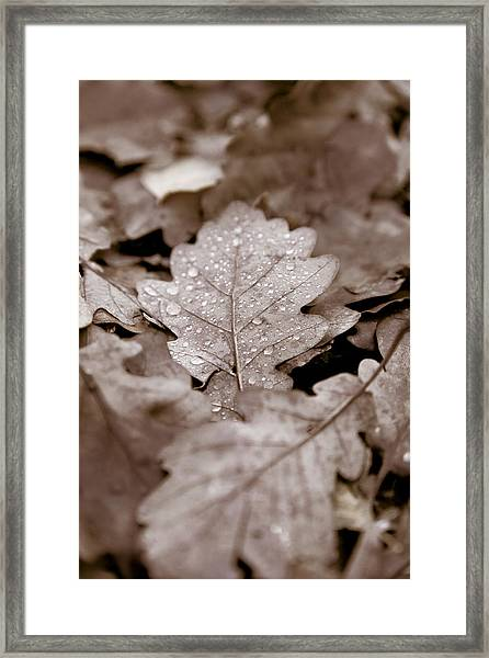 Oak Leaf Framed Print by Frank Tschakert