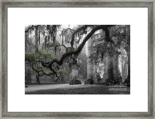 Oak Limb At Old Sheldon Church Framed Print