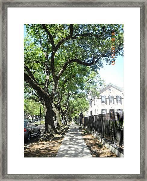 Oak-lined Sidewalk Framed Print