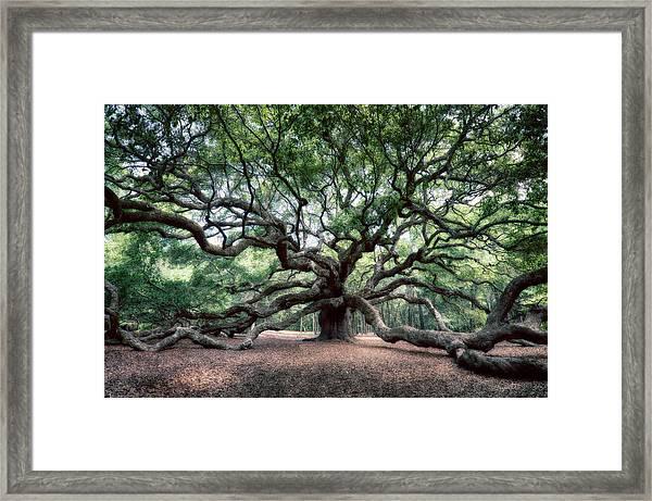 Oak Of The Angels Framed Print