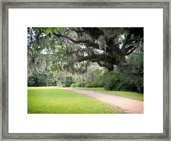 Oak Over The Trail Framed Print