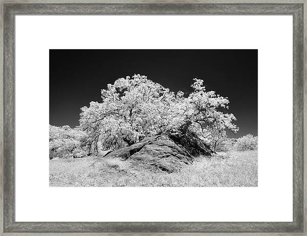 Oak With Boulder I Framed Print by Joseph Smith
