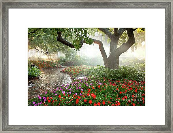Framed Print featuring the photograph Oasis by Susan Cole Kelly