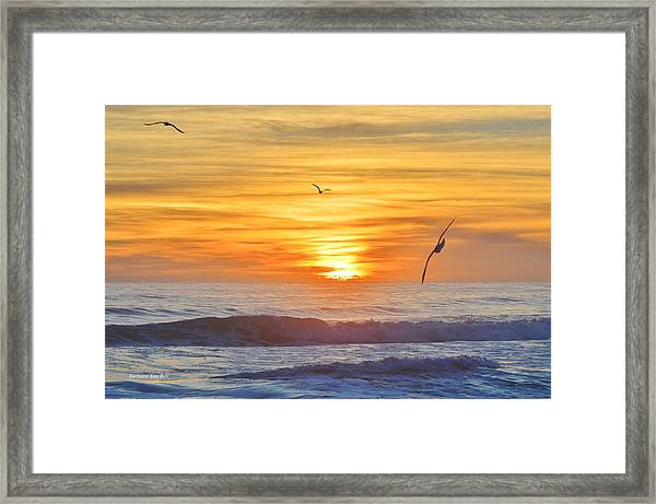 Coquina Beach Framed Print