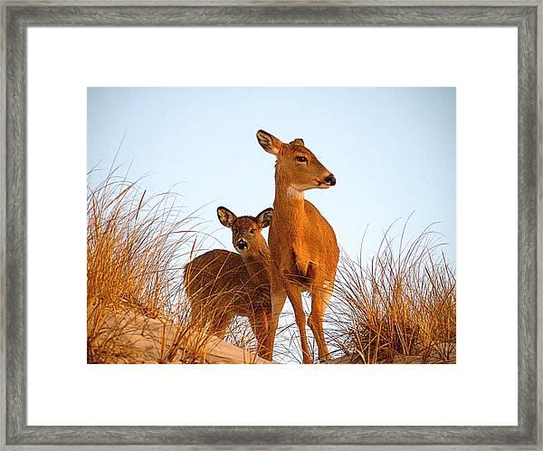 Ocean Deer Framed Print