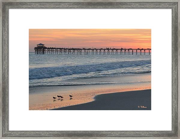 Oceanana Shorebirds Framed Print