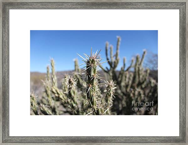 Framed Print featuring the photograph Ocotillo by Antonio Romero