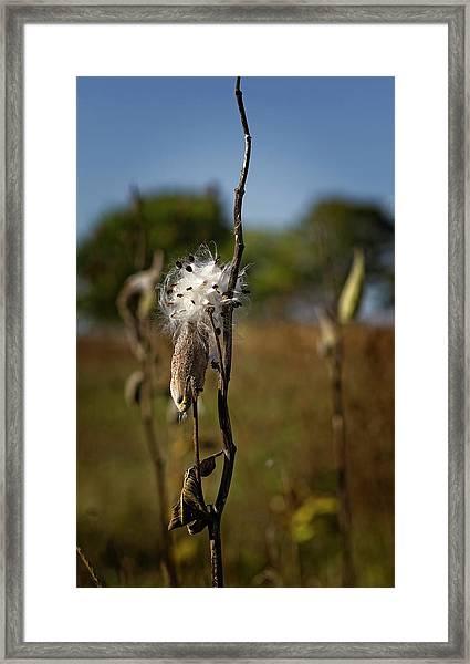 October Forests Framed Print