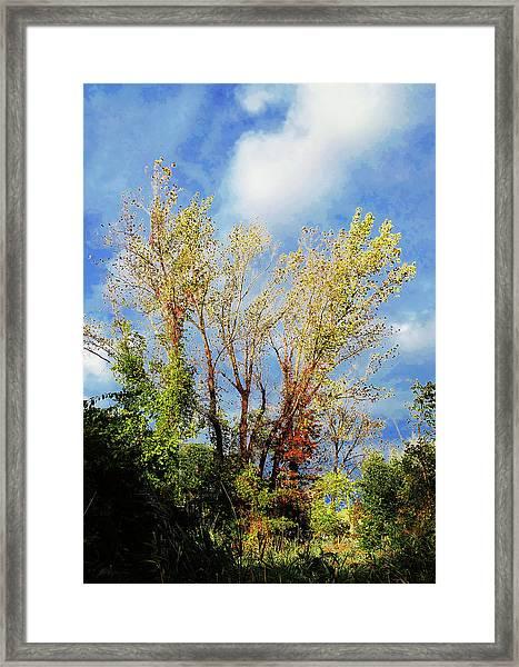 October Sunny Afternoon Framed Print