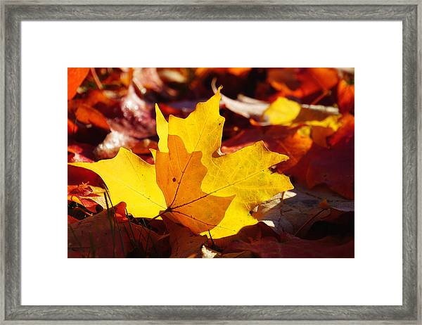 Of Light And Leaves Too Framed Print