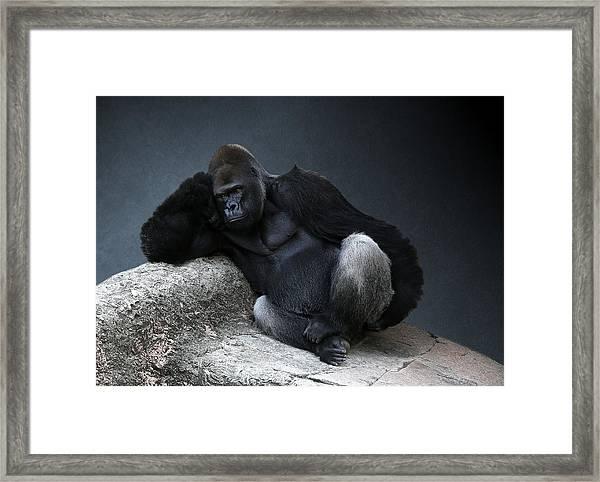 Off Duty Gorilla Framed Print