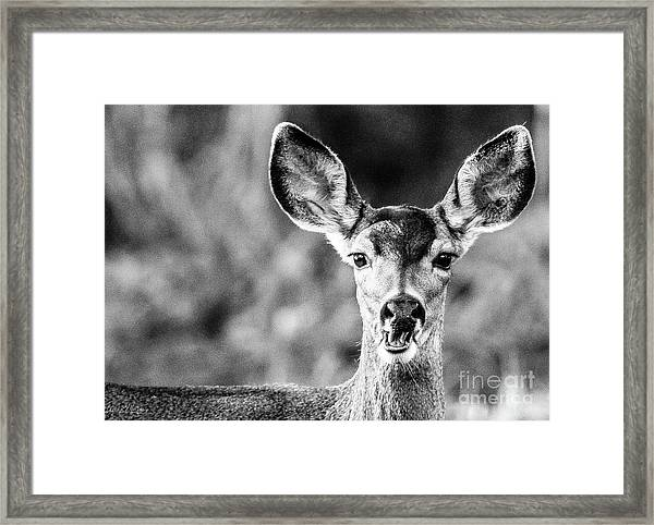 Oh, Deer, Black And White Framed Print