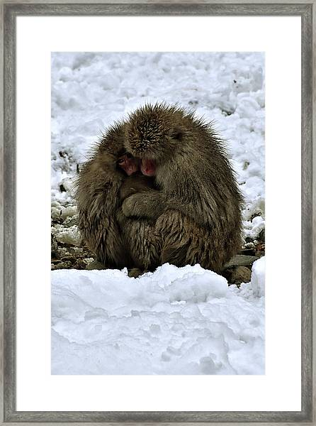 Oh Mummy It's Cold Framed Print