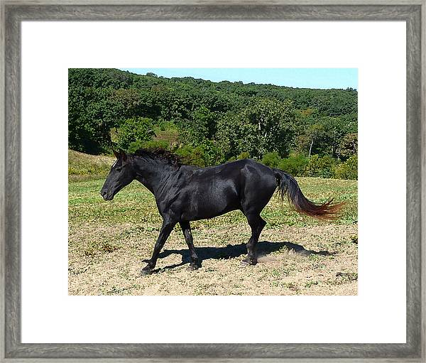 Old Black Horse Running Framed Print