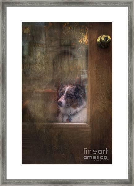 Old Bonnie Dog Framed Print