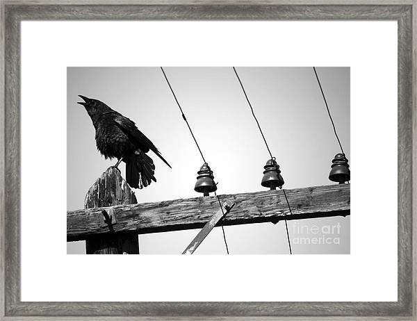 Old Crow Framed Print