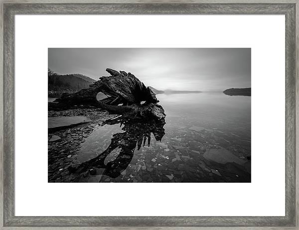 Old Driftwood Framed Print