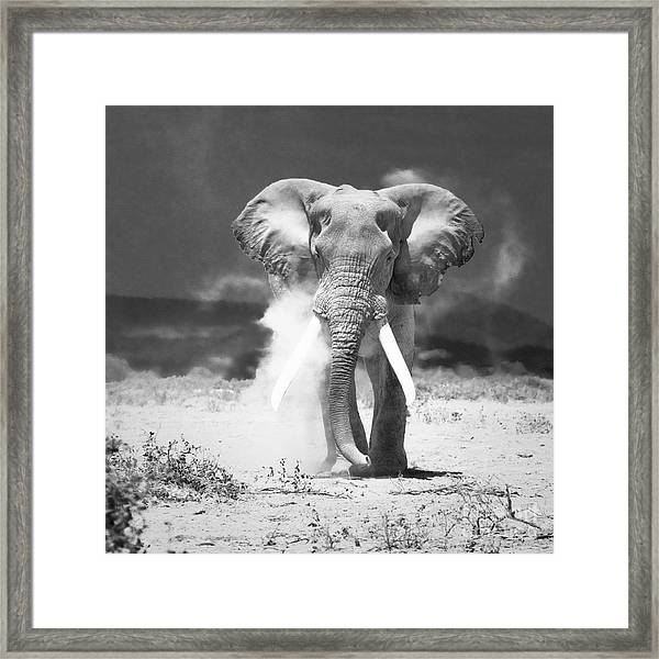 Old Elephant At Amboseli National Park Kenya Framed Print by Konstantin Kalishko