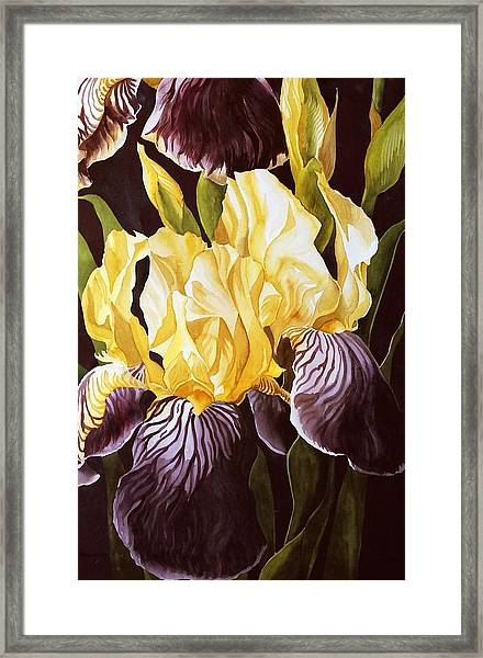 Old Fashion Iris Framed Print
