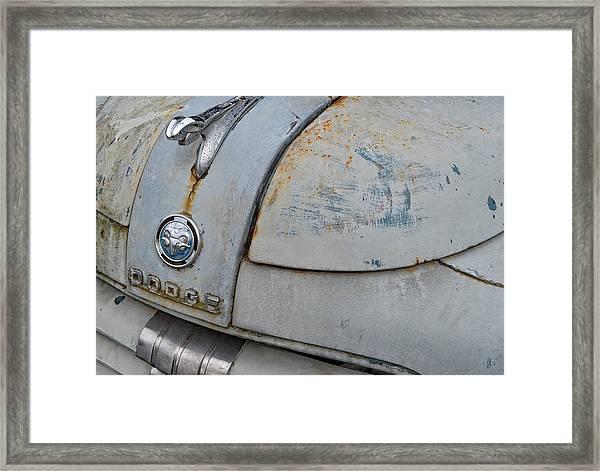 Old Gray Ram Framed Print