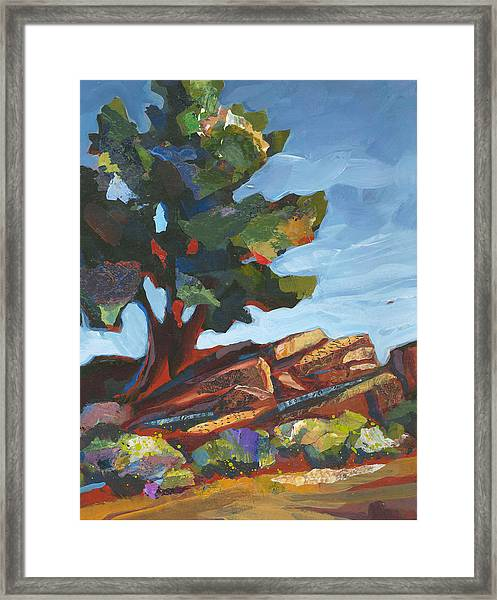Framed Print featuring the painting Old Juniper by Shelli Walters